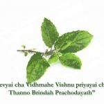 Which is the Best Time to Chant Tulsi Gayatri Mantra?